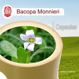 bacopa-monnieri-www-ayu-nl