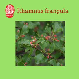rhamnusfrangula